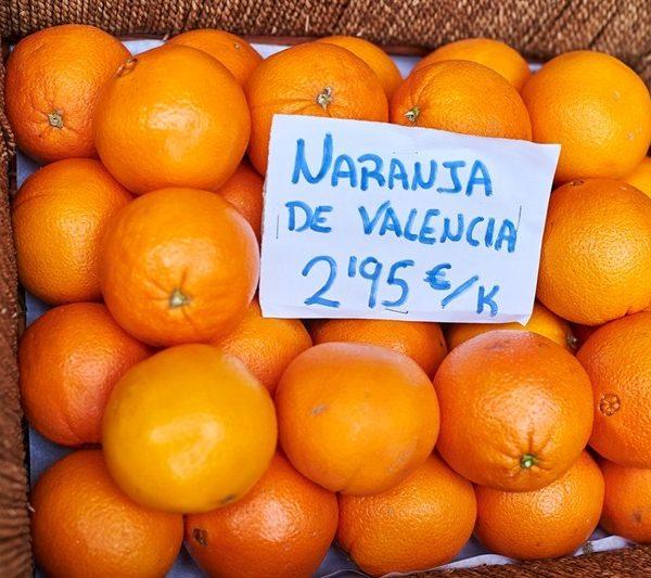עץ תפוז פרנסאווי 50 ל'